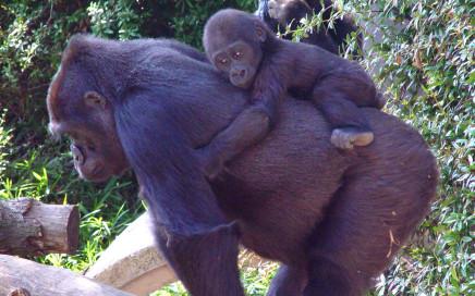 te hoog verantwoordelijkheidsgevoel, teveel aapjes op je schouder, persoonlijke ontwikkeling